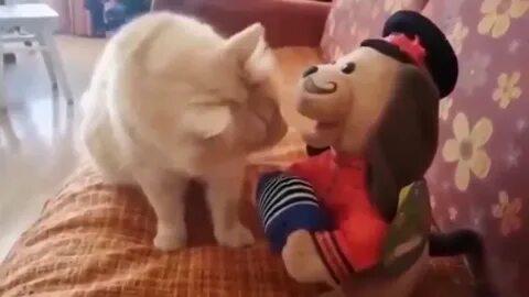 Ставропольский кот попал в программу «Видели видео»