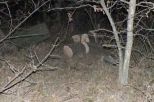 Ставропольчанина убило упавшее дерево