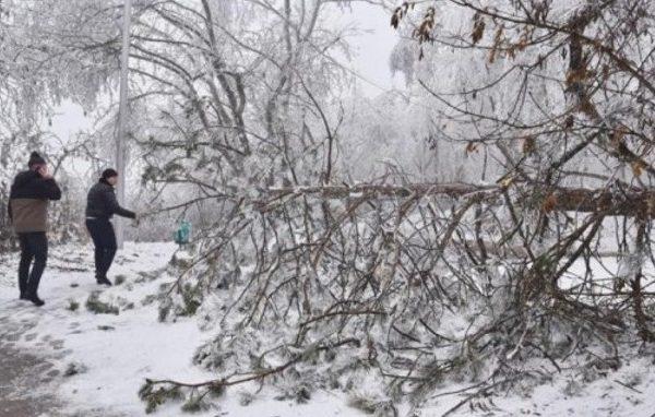 На пятигорском Машуке ограничено движение из-за обледеневших деревьев