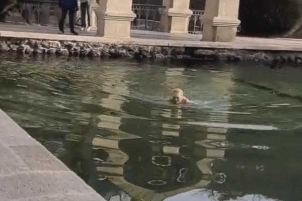 В кисловодском Зеркальном пруду купаются «моржи»