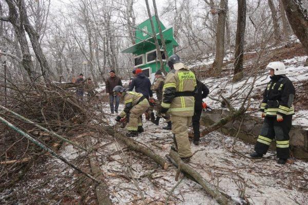 В Железноводске вместо сломавшихся от обледенения деревьев высадят дубы