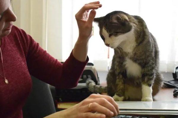 Невинномысский кот Кипиш запустил массовый флешмоб
