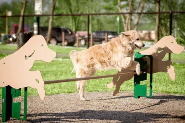 В Железноводске построят зоны для выгула и дрессировки собак